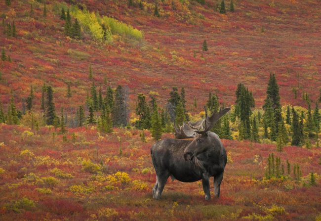 Bowhunting the Alaskan Wilderness